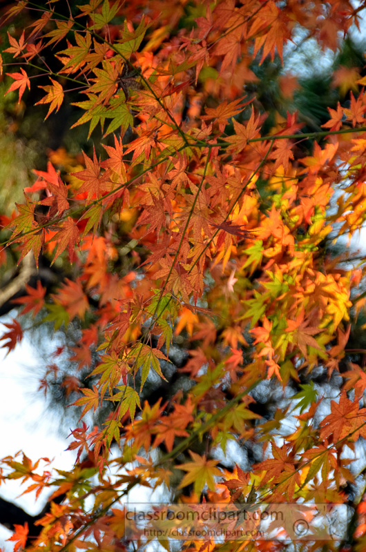 trees-with-fall-foliage-Yu-Yuan-Gardens-Shanghai-China-photo-image-79.jpg