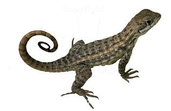 Objects : lizard : Classroom Clipart