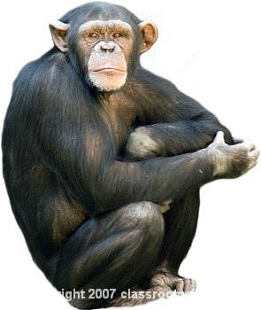 monkey-11.jpg