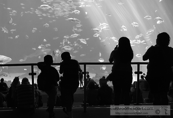 people_aquarium_atlanta_georgia.jpg