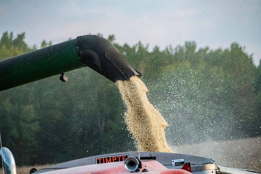corn-pulled-from-harvester.jpg