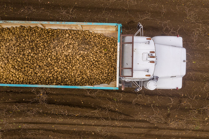 eerial-view-of-the-truck-filled-with-potato-harvest.jpg