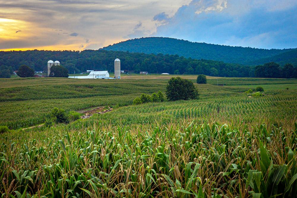 farm-and-cornfield-at-sunset-maryland.jpg