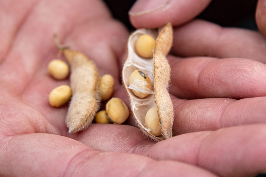hand-olding-open-bean-crop.jpg