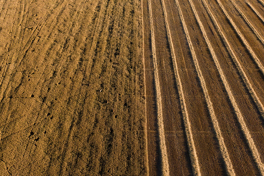 harvested-and-unharvested-wheat-fields-in-montana.jpg