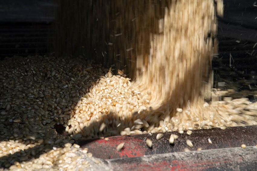 harvester-corn-from-fields-2.jpg