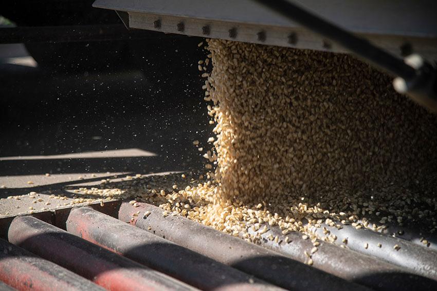 harvester-corn-from-fields.jpg