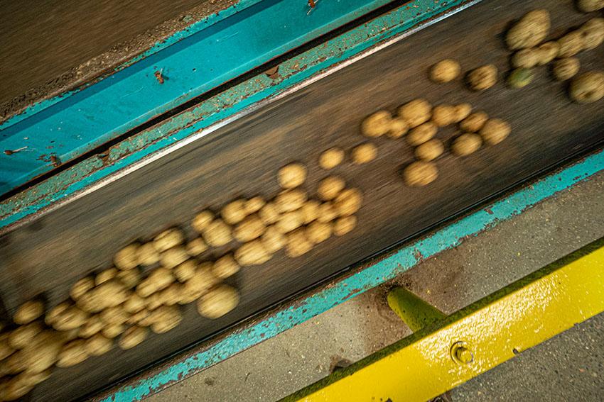 potatos-prepared-for-food-processing-.jpg