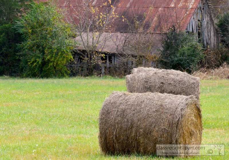 rolls-of-hay-drying-in-field-near-barn-picture-image81a.jpg