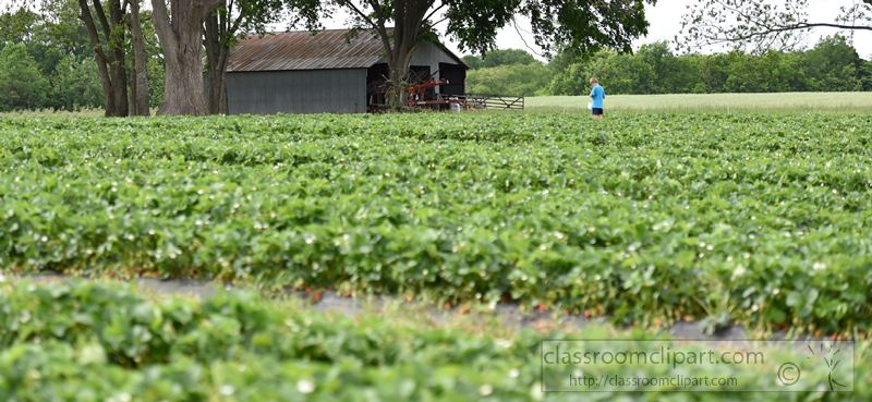 standing-in-a-strawberry-patch-tennessee-photo-image-1436.jpg