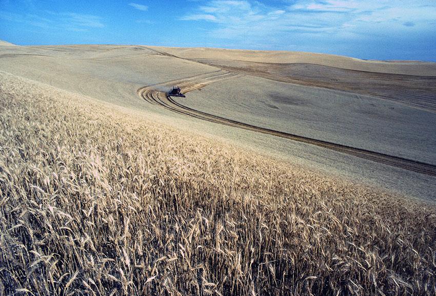 wheat-harvest-in-field.jpg