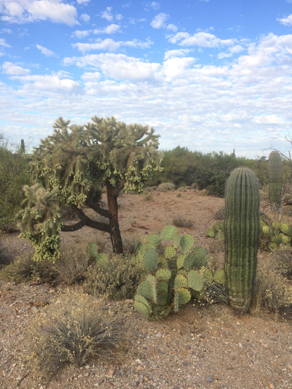 Sonoran-Desert-is-home-to-many-species-of-cactus.jpg