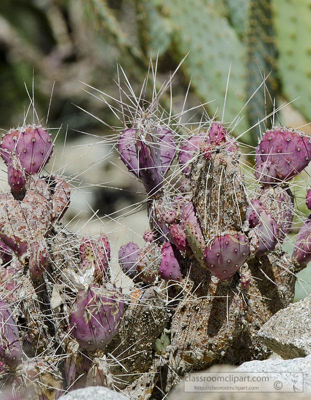 cacti_plant_902.jpg