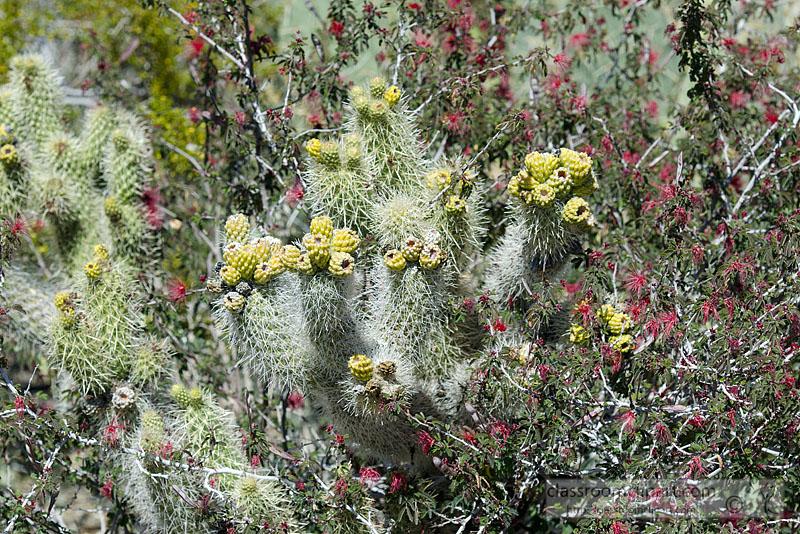 cacti_plant_914A.jpg