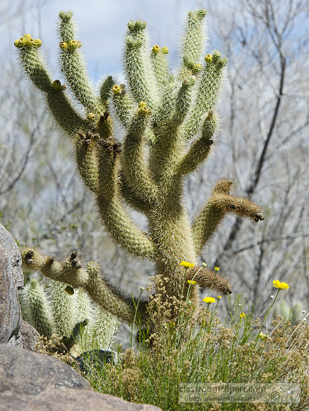 cacti_plant_935.jpg