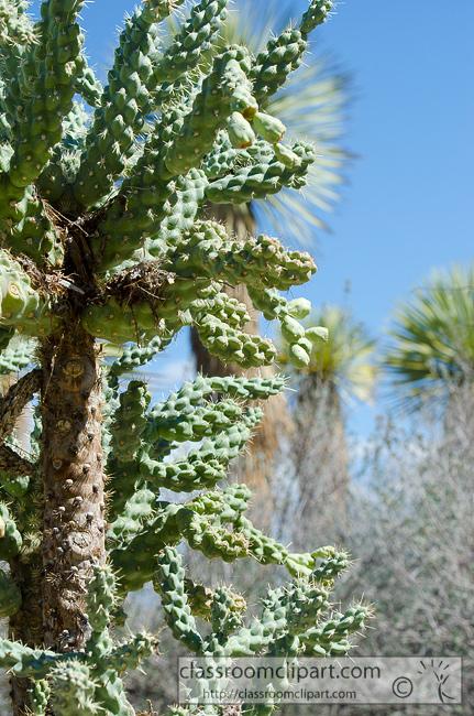 cactus_plant_757.jpg