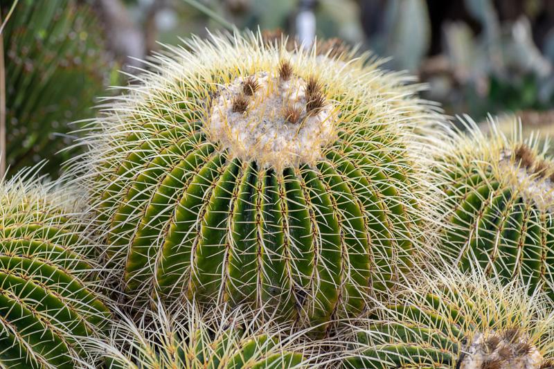 group-of-barrel-cactus-02888.jpg