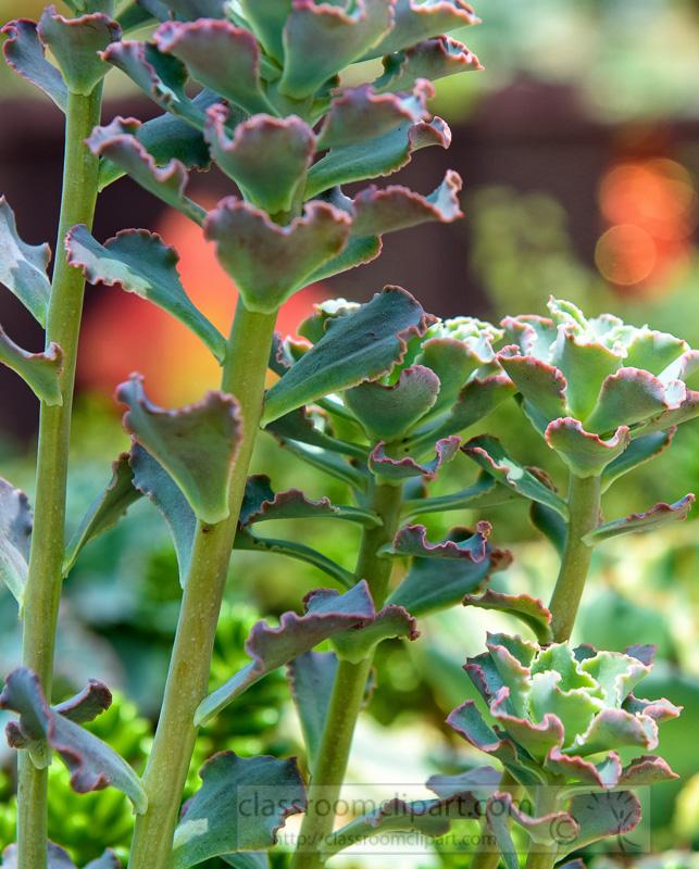 succulent-plants-flower-dome-singapore-photo-image-9116-2.jpg