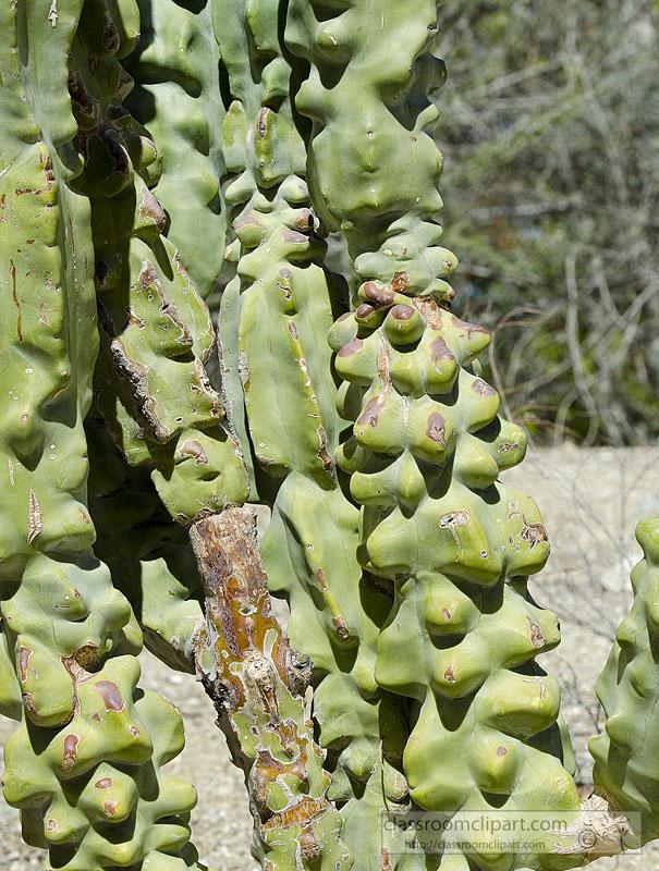 totem_pole_cactus_832.jpg