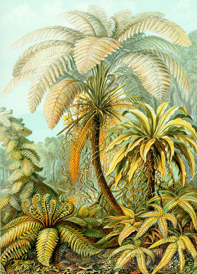 color-scientific-illustration-of-tropical-ferns.jpg