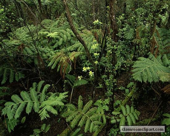 forest_hawaii-1.jpg