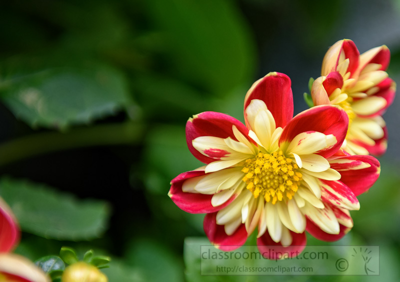 red-yellow-white-flowers-singapore-photo-9195.jpg