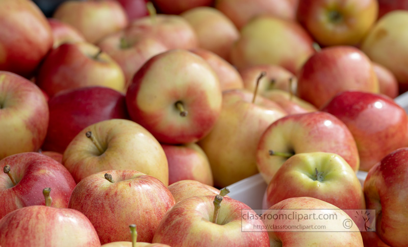 red-and-yellow-apples-at-the-farmers-market-00134-2.jpg