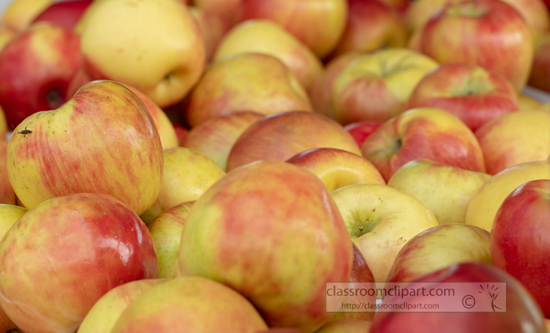 red-and-yellow-apples-at-the-farmers-market-132-2.jpg