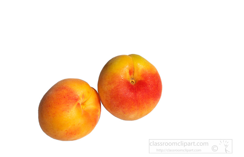 two-ripe-apricots-with-white-background-photo-image-521.jpg