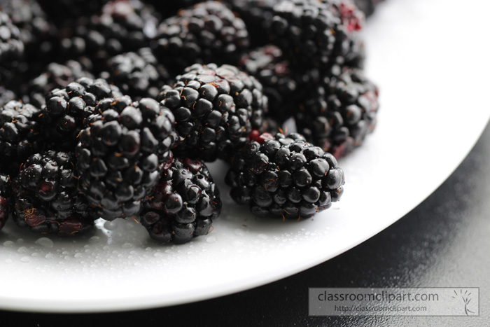 black_berries_14504.jpg