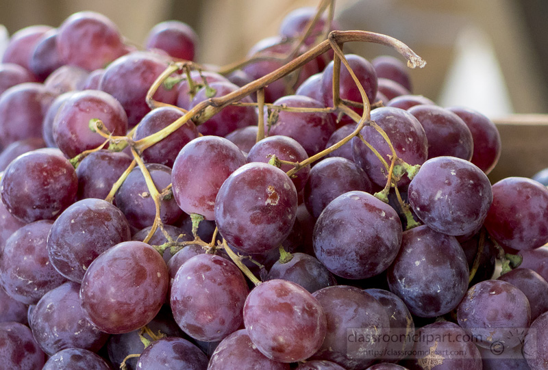 picture-bunch-of-red-grapes-fruit-image1651c.jpg