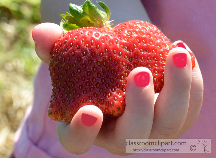 holding_freshly_picked_strawberries.jpg
