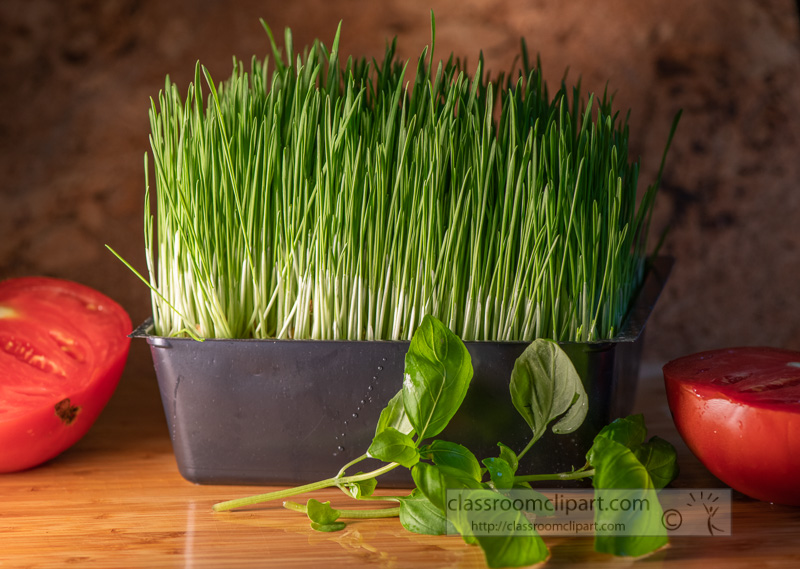 green-wheat-grass-with-slice-of-tomato-basil-leaf-0343.jpg