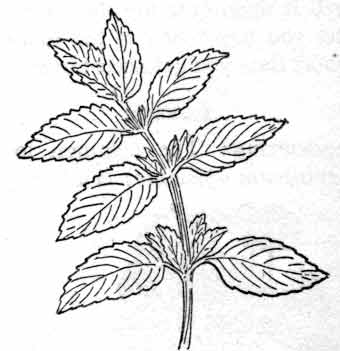 Peppermint likewise Website Admin Use Case Diagrams Ex le additionally ShowArticle moreover Binoculars Outline 1111 further Porcupine ba. on manual mode