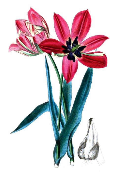 37A_flower_illustration.jpg