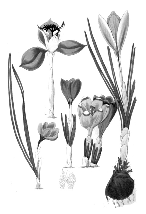 63A_flower_illustration.jpg
