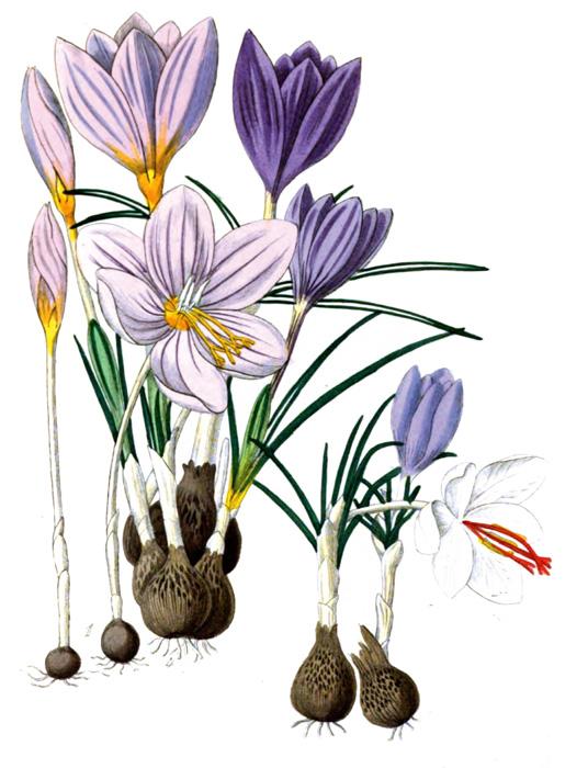 65a_flower_illustration.jpg