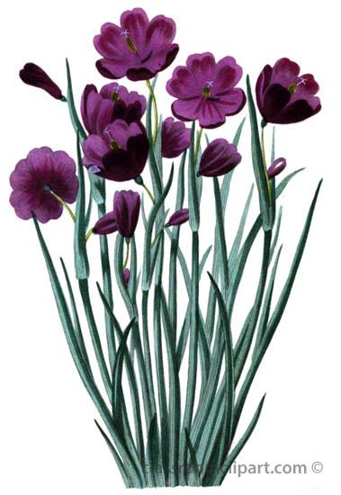 69A_flower_illustration.jpg