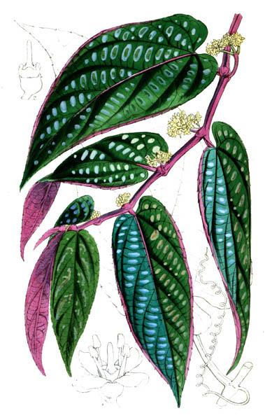 botanical_plant_10A.jpg