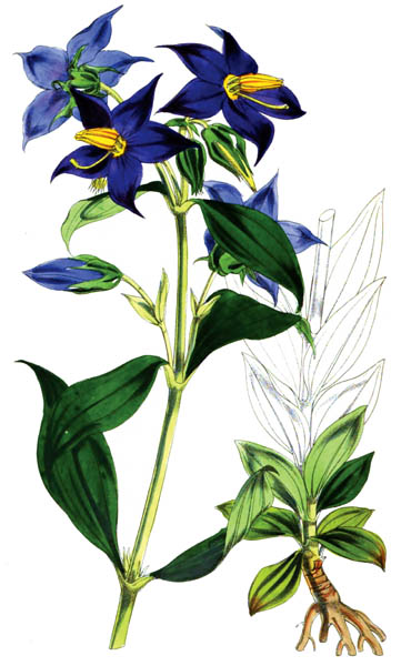 botanical_plant_18A.jpg