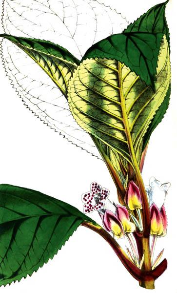 botanical_plant_22A.jpg