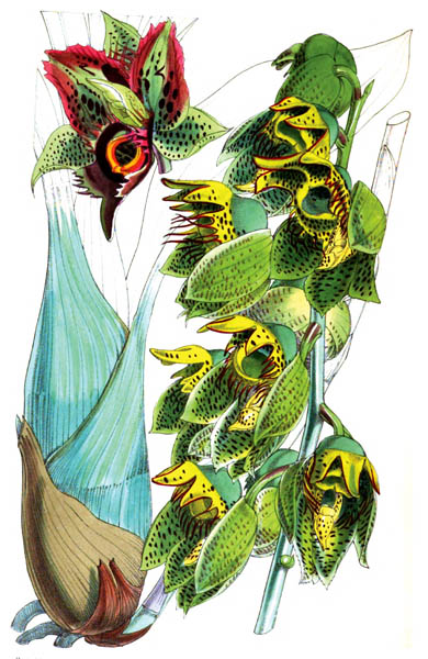 botanical_plant_40A.jpg
