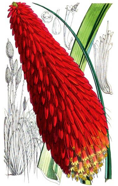 botanical_plant_64A.jpg