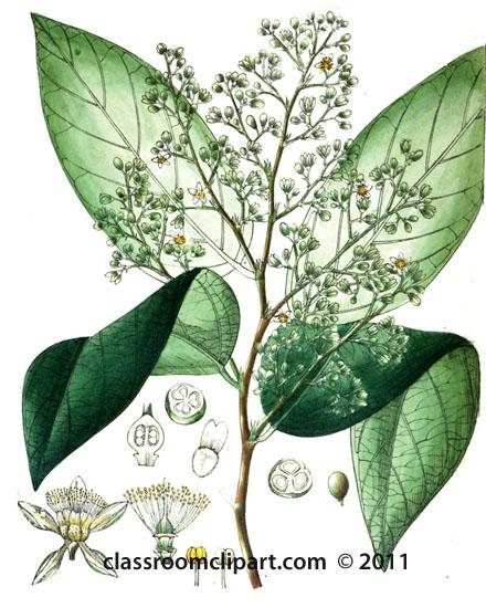 plant-illustration-042-A.jpg