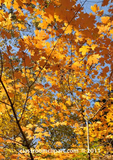 fall-folliage-tree-leaves.jpg