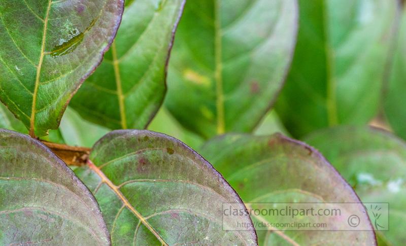 smooth-pinnate-plant-leaves-5355.jpg