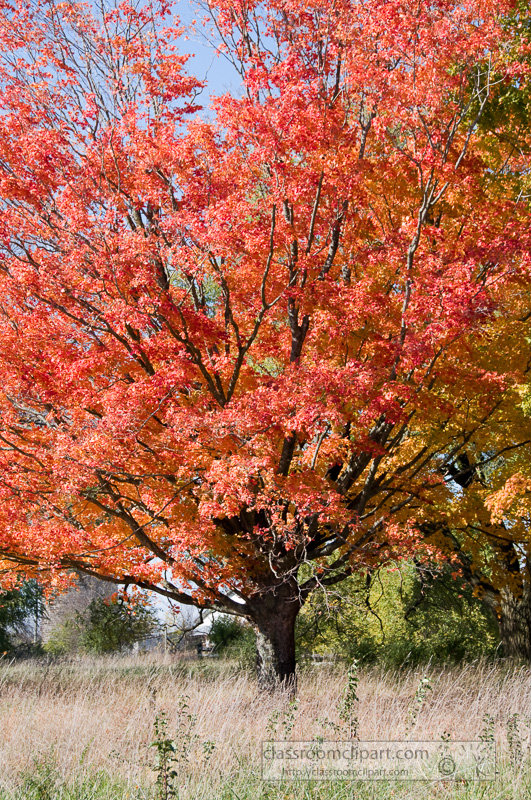 fall_leaves_0806.jpg