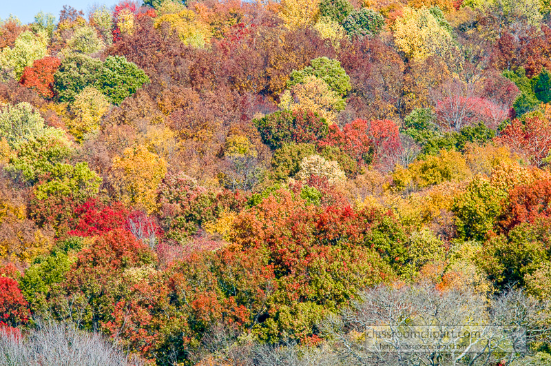 fall_leaves_0816.jpg