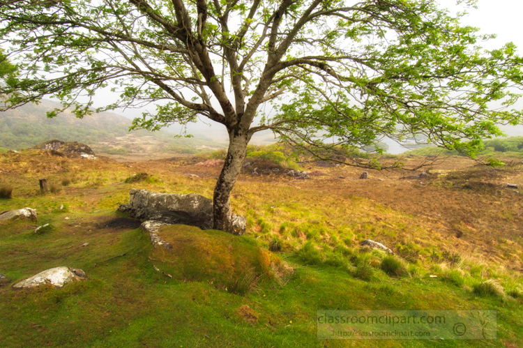 single-tree-along-the-coast-of-Ireland-photo.jpg