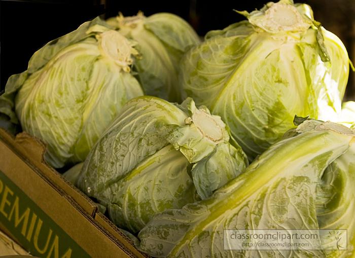 cabbage_heads_819.jpg